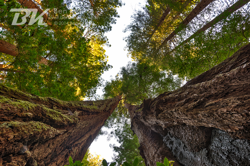 Muir Woods, California on May 24, 2014.  Photo by Ben Krause
